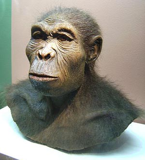 Reconstruction of Homo habilis